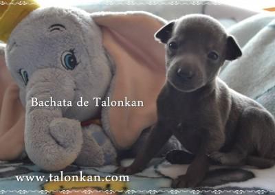 Bachata de Talonkan