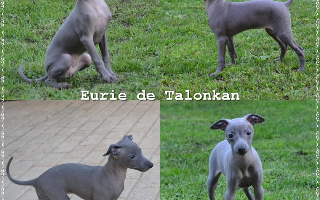 Eurie de Talonkan